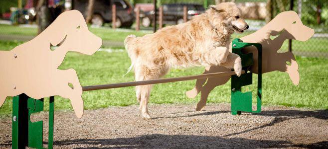 Dog Parks - Suttle Recreation, Vancouver BC